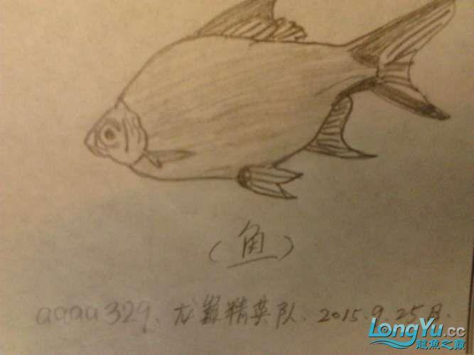 北京观赏鱼 渔场【龙巅精英】铝笔绘画、(鱼)