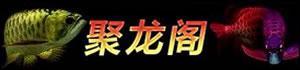 深圳市聚龙阁渔业有限公司