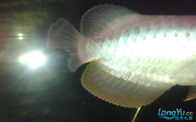 另外胡须分叉这种问题一般来讲除先天之外 观赏鱼常见疾病 南通水族批发市场第2张