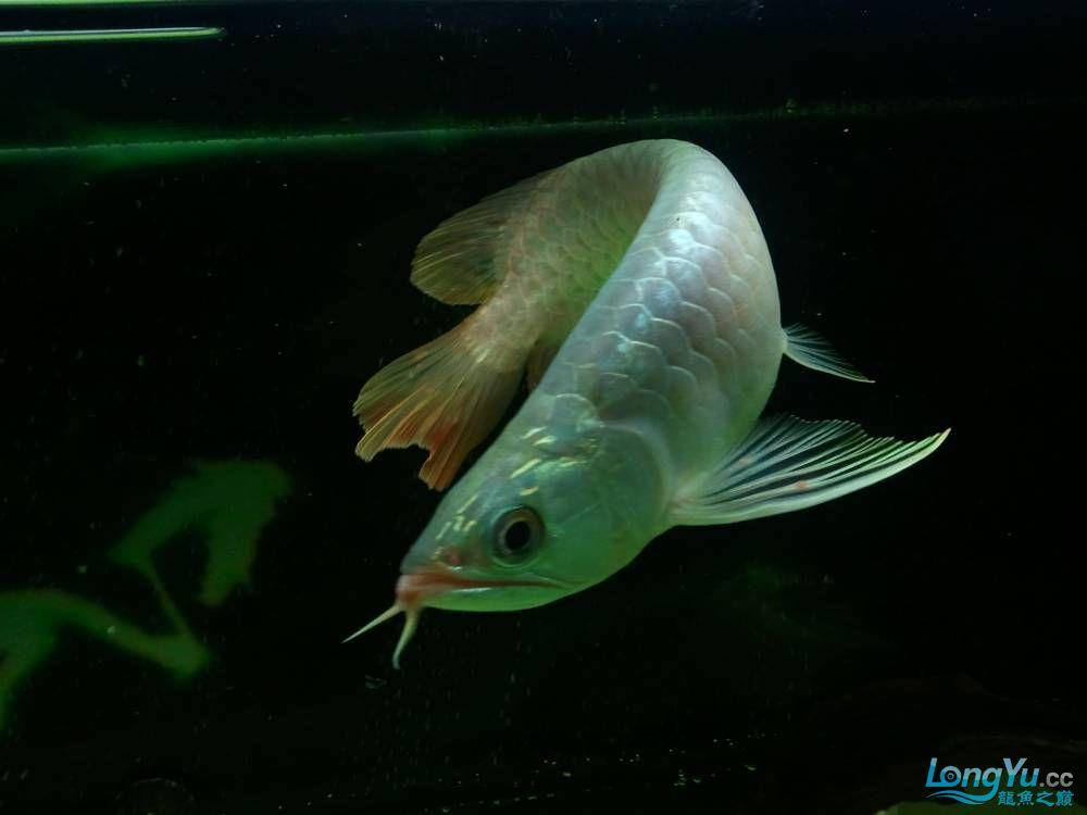 (多图多图),说真的我真的不会分辨鱼了请高手多P,告诉我品种的最好啦 济南观赏鱼 济南龙鱼第2张