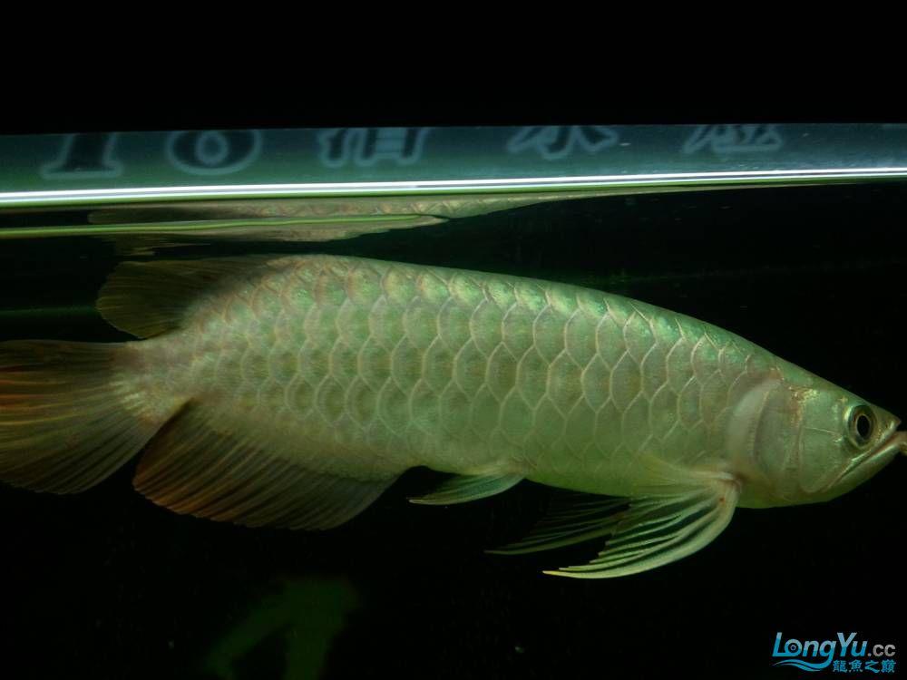 (多图多图),说真的我真的不会分辨鱼了请高手多P,告诉我品种的最好啦 济南观赏鱼 济南龙鱼第3张