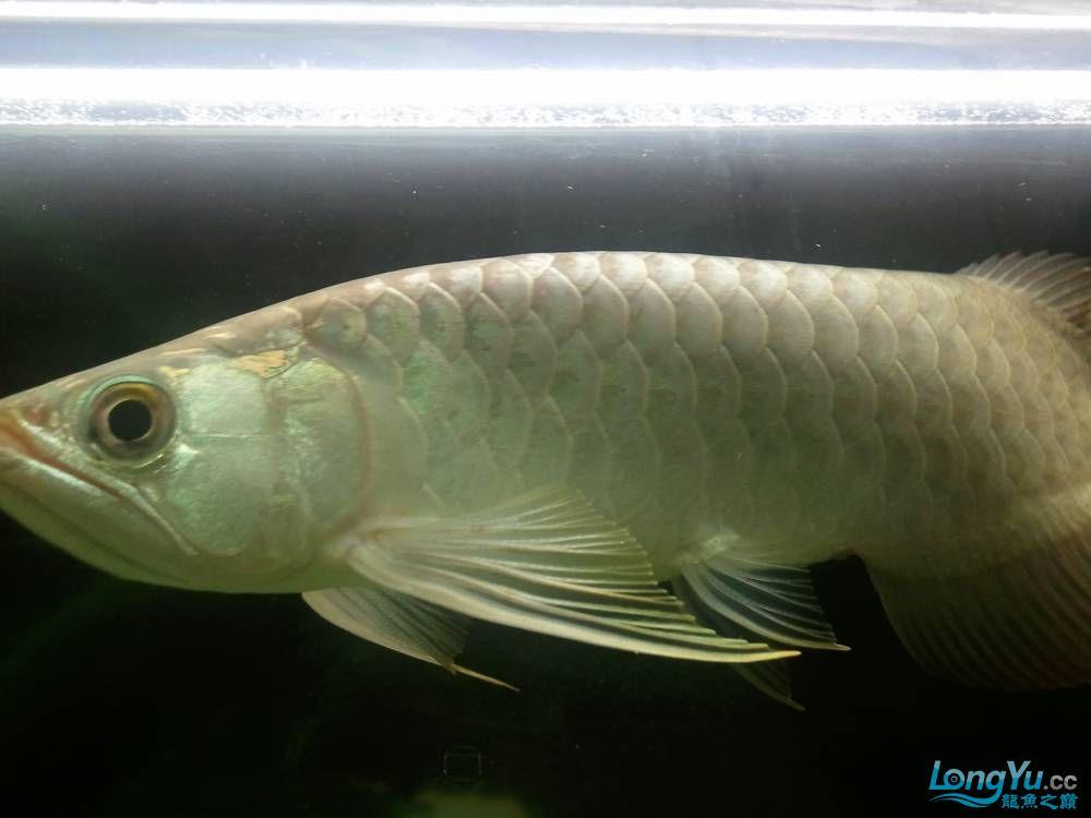 (多图多图),说真的我真的不会分辨鱼了请高手多P,告诉我品种的最好啦 济南观赏鱼 济南龙鱼第19张