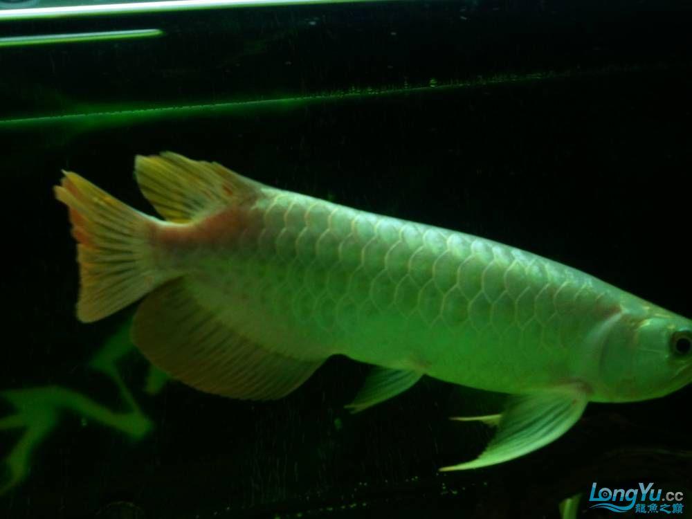 (多图多图),说真的我真的不会分辨鱼了请高手多P,告诉我品种的最好啦 济南观赏鱼 济南龙鱼第33张
