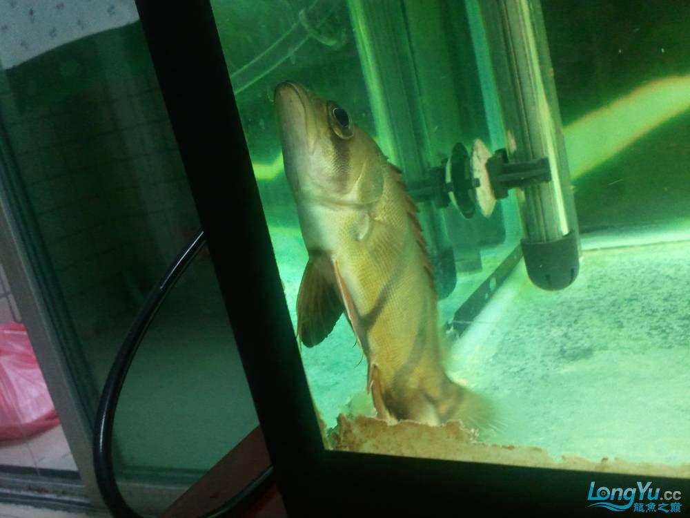 (多图多图),说真的我真的不会分辨鱼了请高手多P,告诉我品种的最好啦 济南观赏鱼 济南龙鱼第53张