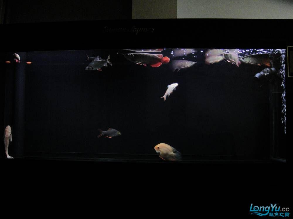 新手升级,五龙入昆明鱼缸造景缸(2个月了)
