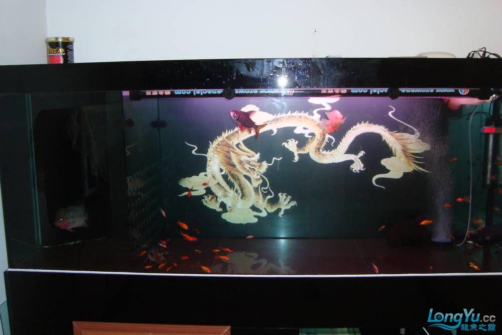 请龙翔大哥跟鱼友乡亲们进来瞅瞅我的小鱼,猛提意见~! 呼和浩特龙鱼论坛 呼和浩特龙鱼第5张