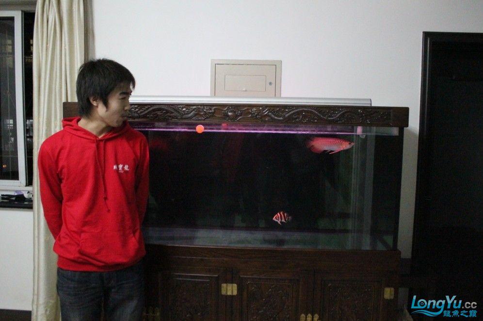 捕猎专家四合肥哪里有卖鱼缸的 合肥观赏鱼 合肥龙鱼第9张