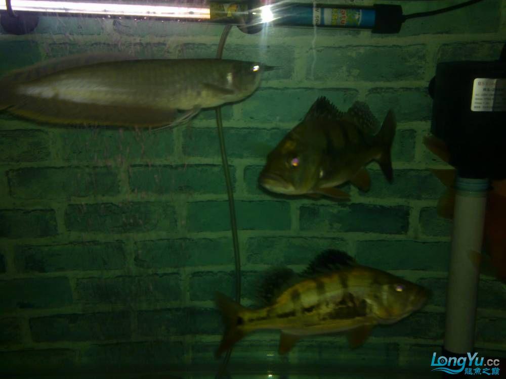 小弟的穷混养请大家PP兰州的鱼友支持一下啊 西宁观赏鱼 西宁龙鱼第2张