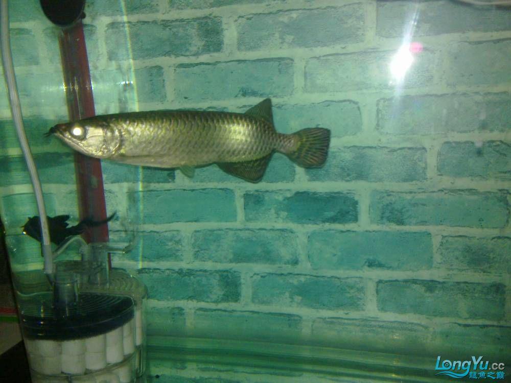 小弟的穷混养请大家PP兰州的鱼友支持一下啊 西宁观赏鱼 西宁龙鱼第3张