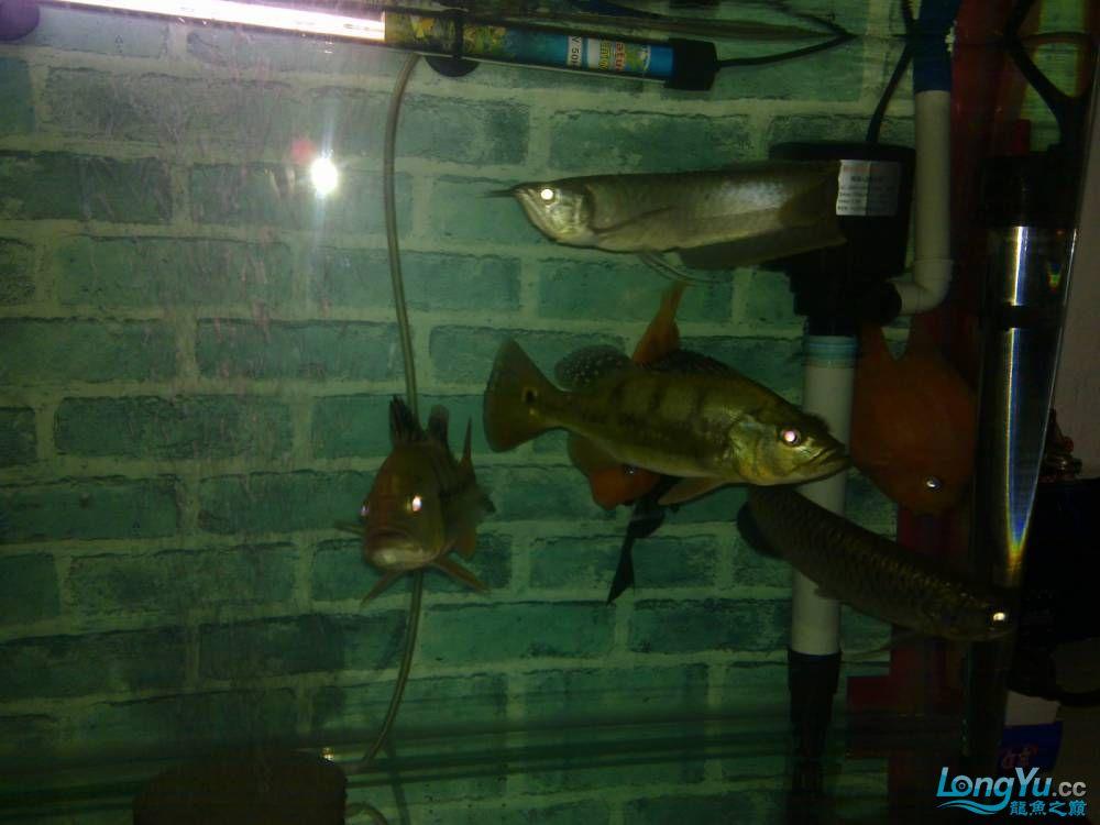 小弟的穷混养请大家PP兰州的鱼友支持一下啊 西宁观赏鱼 西宁龙鱼第6张
