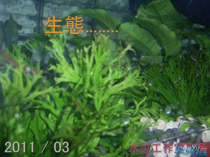 石家庄热带鱼交易巨資打造亞洲最頂尖的水族生態工藝-3系統生態篇 石家庄水族批发市场 石家庄龙鱼第13张