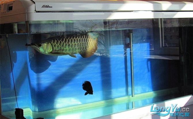 再发宝石照片欢迎往死里拍长沙帝王三间鼠鱼价格 长沙观赏鱼 长沙龙鱼第14张