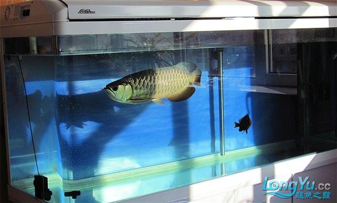 再发宝石照片欢迎往死里拍长沙帝王三间鼠鱼价格 长沙观赏鱼 长沙龙鱼第3张