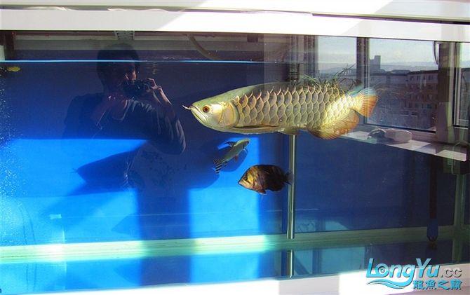再发宝石照片欢迎往死里拍长沙帝王三间鼠鱼价格 长沙观赏鱼 长沙龙鱼第7张