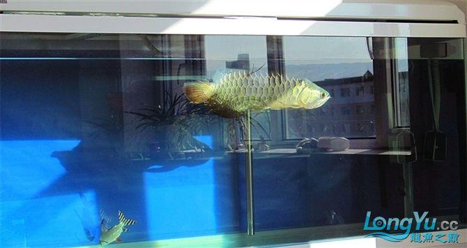 再发宝石照片欢迎往死里拍长沙帝王三间鼠鱼价格 长沙观赏鱼 长沙龙鱼第1张