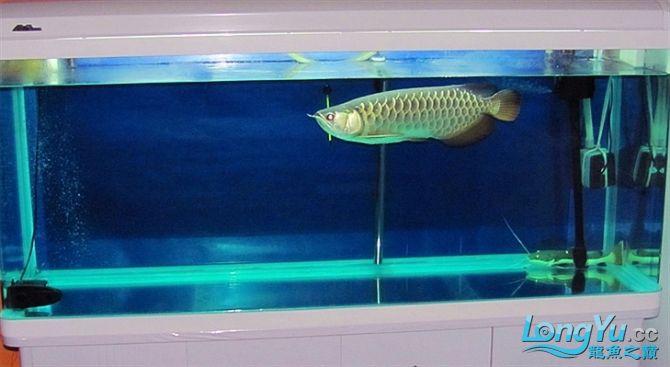 再发宝石照片欢迎往死里拍长沙帝王三间鼠鱼价格 长沙观赏鱼 长沙龙鱼第2张