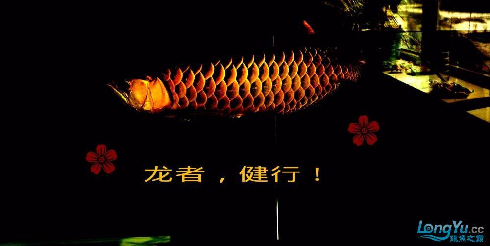 再发宝石照片欢迎往死里拍长沙帝王三间鼠鱼价格 长沙观赏鱼 长沙龙鱼第15张