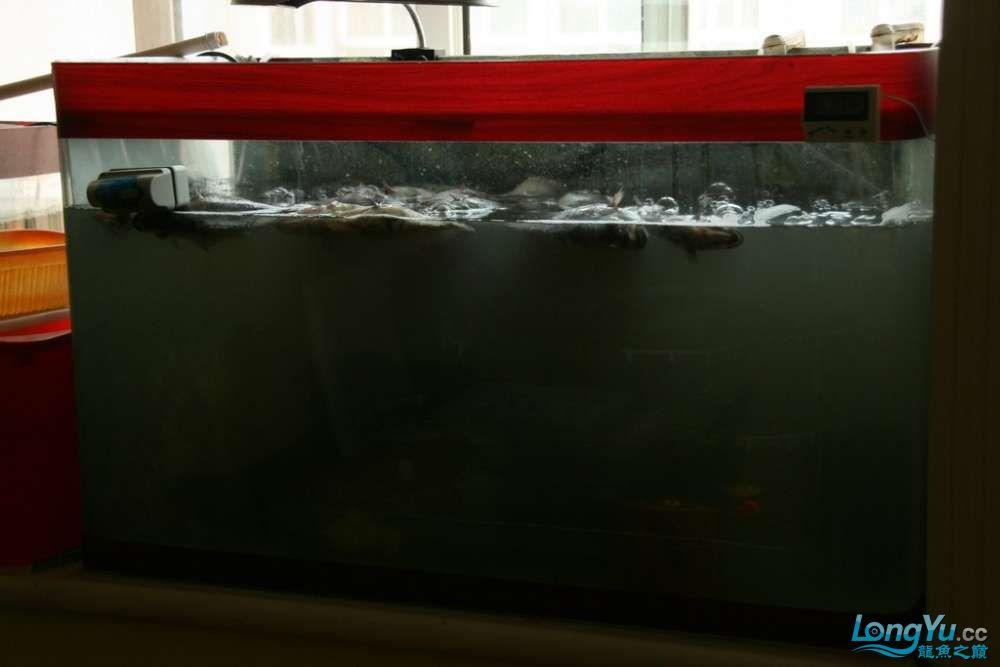 哈尔滨水族馆地址真是悲惨呀、悲惨至极呀,我的虎群覆灭。