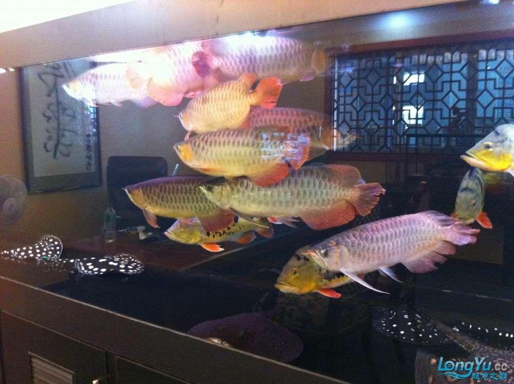 3800810900混养哈尔滨龙鱼市场