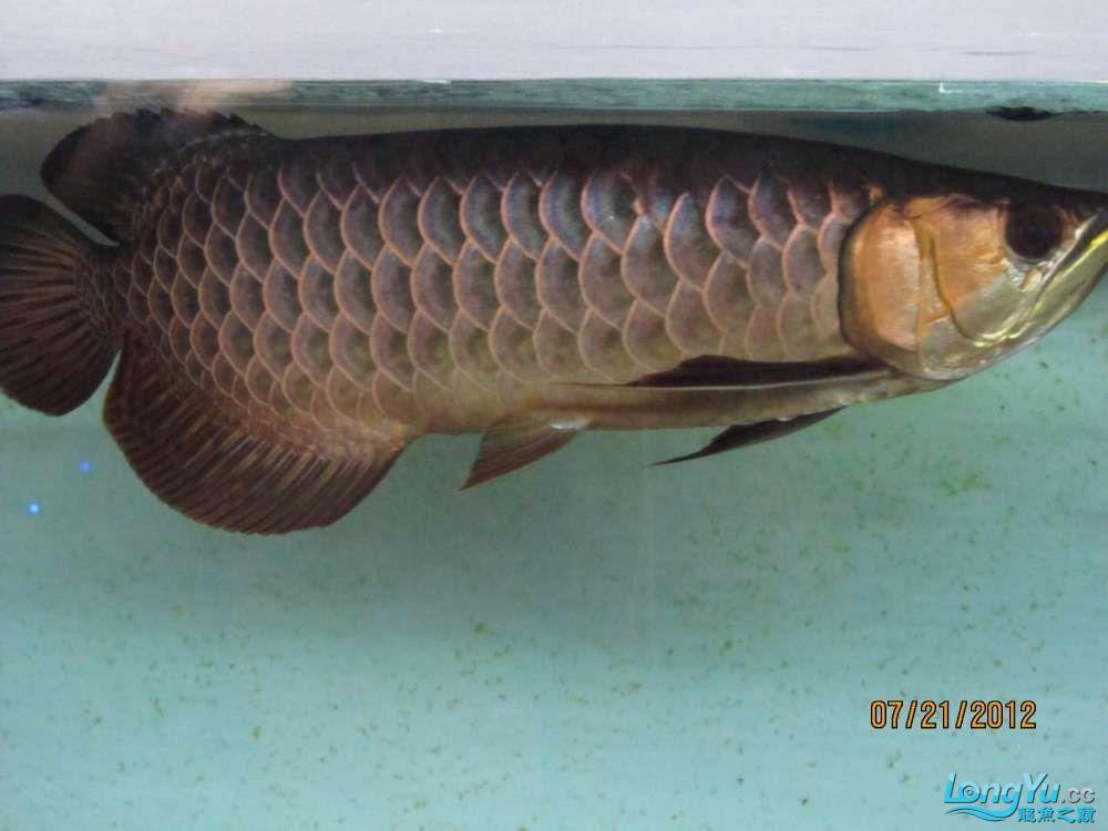 鱼身右侧4.jpg