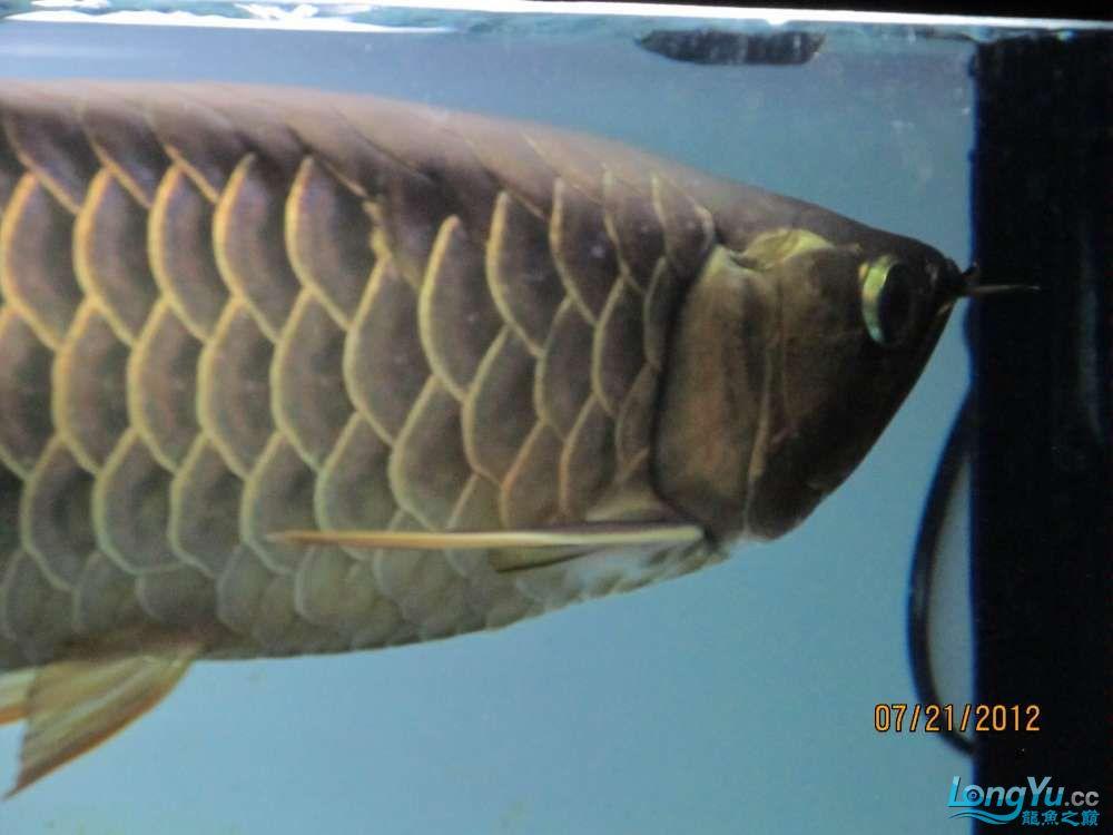 鱼头右侧2.jpg