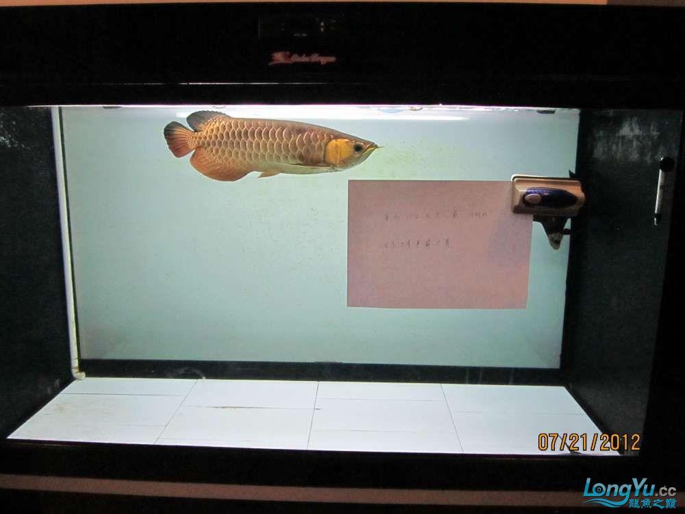 鱼争霸赛2.jpg