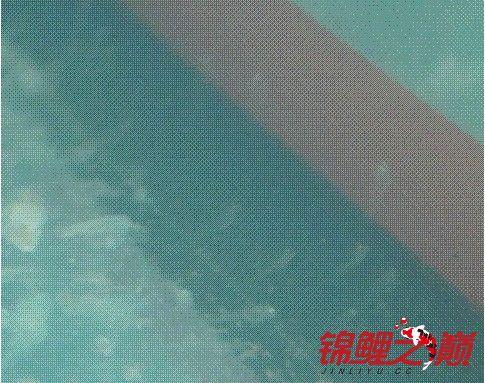 锦鲤3.jpg