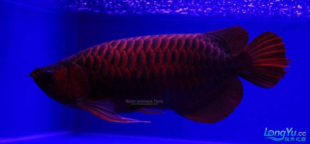 Ikan1543cm_zps0fcefa20.jpg