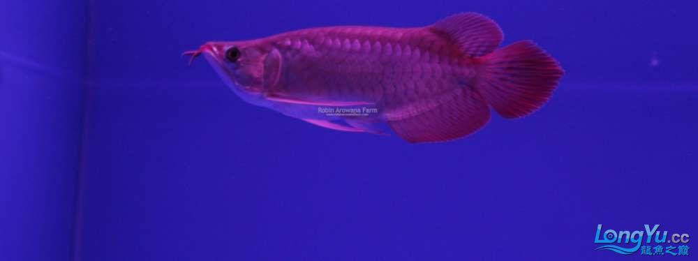 Ikan ke 19 (23).jpg