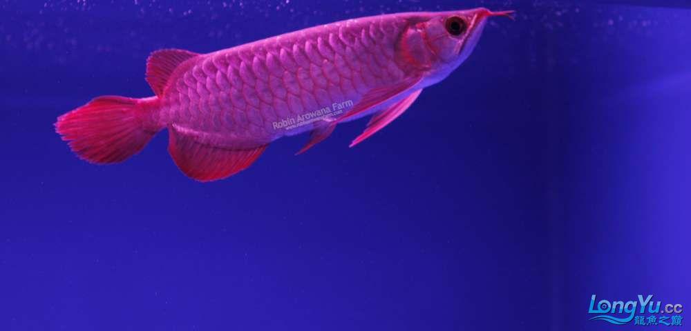 Ikan ke 20(Pending)(23cm).jpg
