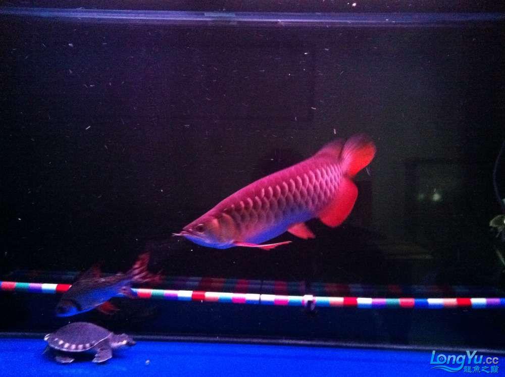我的鱼宝宝 (1).jpg