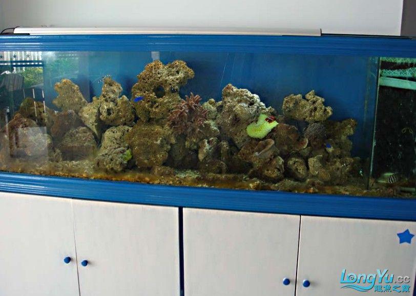 海水缸1.jpg