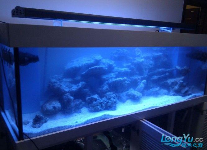 海水缸2.jpg