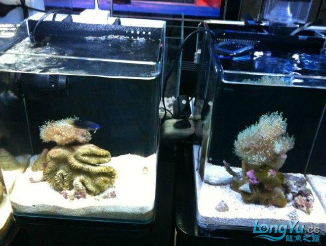 海水缸4.jpg