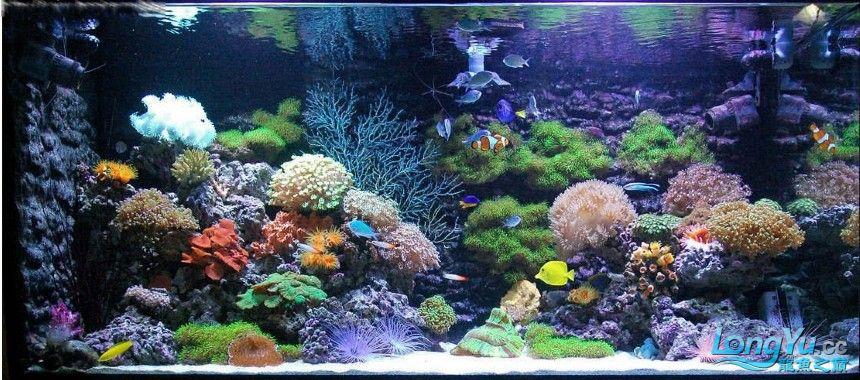海水缸5.jpg