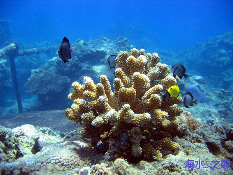 珊瑚种类石珊瑚1.jpg