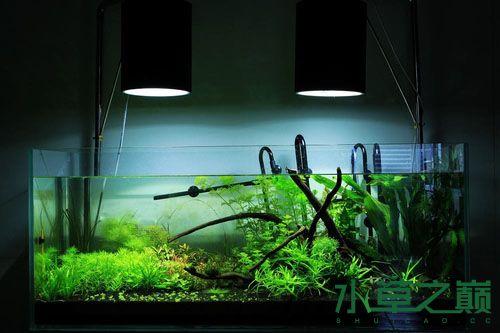 养水草用什么灯好
