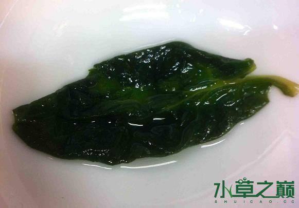菠菜保存方法2.jpg