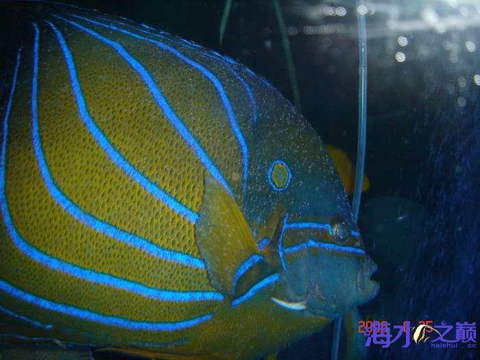 白点病海水鱼5.jpg