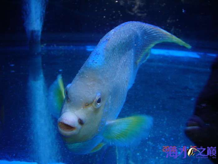 白点病海水鱼3.jpg