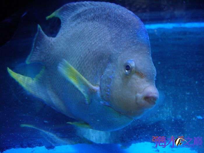 白点病海水鱼4.jpg