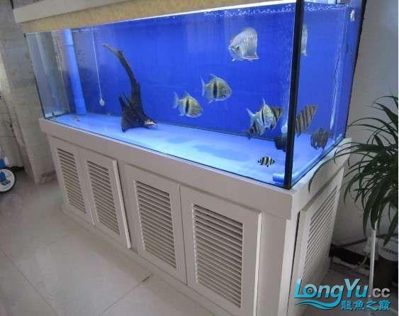 1000元买的超级三纹印尼大虎!!! 北京龙鱼论坛 北京龙鱼第8张