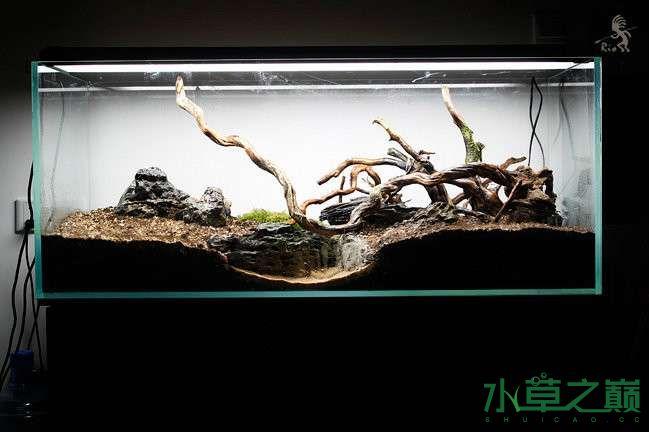 石家庄热带雨林水陆缸造景教程 石家庄水族批发市场 石家庄龙鱼第8张