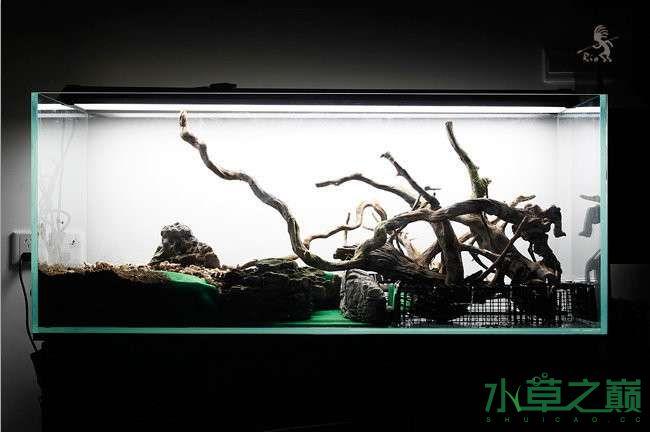 石家庄热带雨林水陆缸造景教程 石家庄水族批发市场 石家庄龙鱼第23张