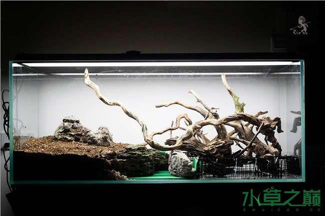 石家庄热带雨林水陆缸造景教程 石家庄水族批发市场 石家庄龙鱼第7张