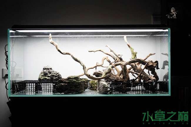 石家庄热带雨林水陆缸造景教程 石家庄水族批发市场 石家庄龙鱼第5张