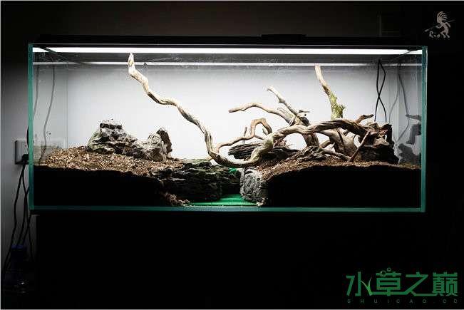 石家庄热带雨林水陆缸造景教程 石家庄水族批发市场 石家庄龙鱼第27张