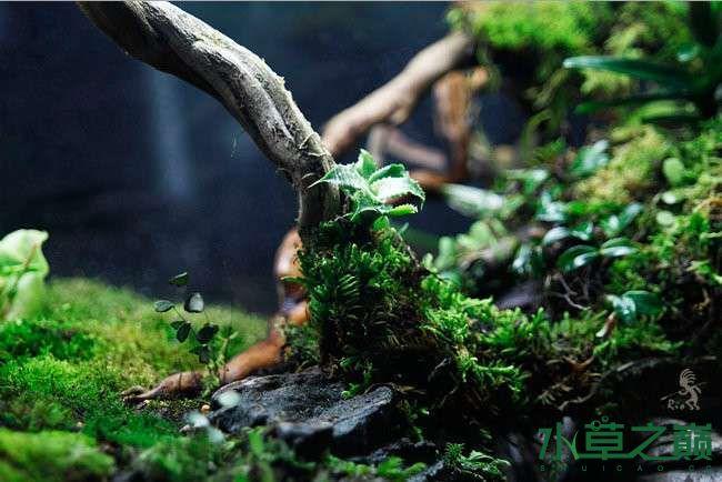 石家庄热带雨林水陆缸造景教程 石家庄水族批发市场 石家庄龙鱼第18张