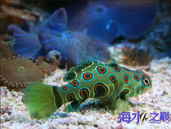 有个稀罕东东你们发现没 武汉水族批发市场 武汉龙鱼第2张