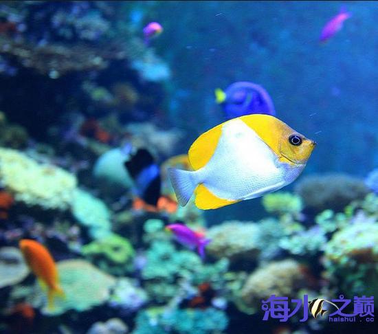 有个稀罕东东你们发现没 武汉水族批发市场 武汉龙鱼第4张